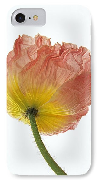 Iceland Poppy 1 IPhone Case by Susan Rovira
