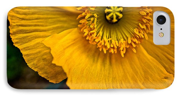 Iceland Poppy In Yellow IPhone Case by Ronda Broatch