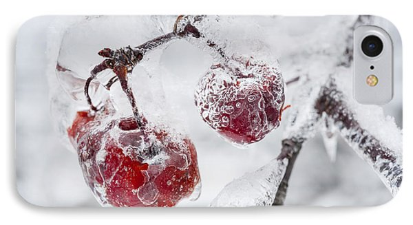 Icy Branch With Crab Apples IPhone Case by Elena Elisseeva