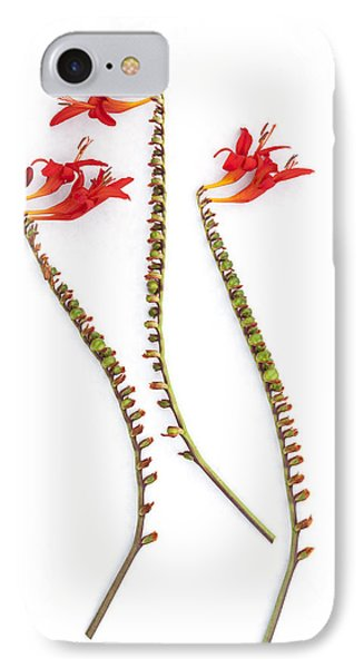 If Seahorses Were Flowers Phone Case by Carol Leigh