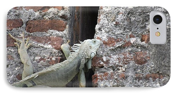 IPhone Case featuring the photograph Iguana by David S Reynolds