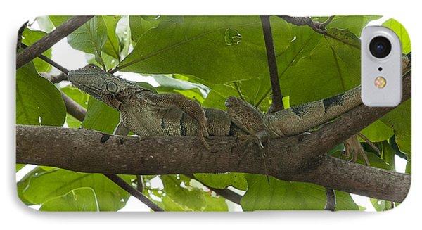Iguana In Tree Phone Case by Dan Friend