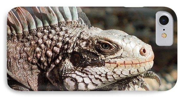 Iguana Phone Case by Jodi Terracina
