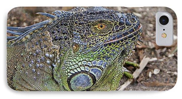 IPhone Case featuring the photograph Iguana by Olga Hamilton