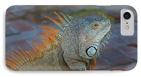 Iguana, Puerto Vallarta, Jalisco, Mexico IPhone Case by Douglas Peebles