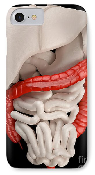 Illustration Of Digestive System Phone Case by David Marchal
