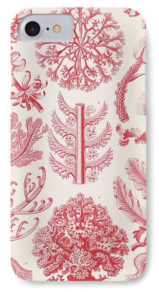 Illustration Shows Red Algae. Florideae. - Rotalgen IPhone Case by Artokoloro