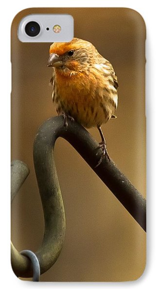 IPhone Case featuring the photograph I'm Orange by Robert L Jackson