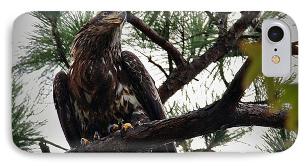 Immature American Bald Eagle IPhone Case by Linda Unger