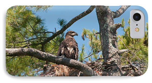 Immature Bald Eagle IPhone Case by Brenda Jacobs