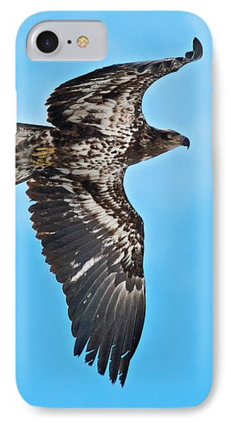 Immature Bald Eagle IPhone Case by Stephen  Johnson