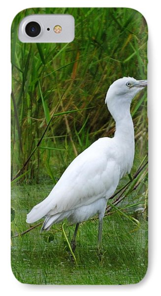 Immature Little Blue Heron IPhone Case by Dan Williams