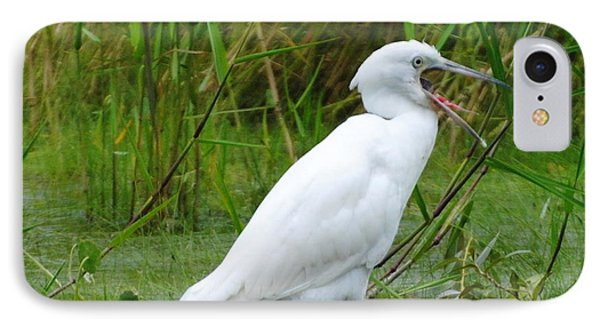 Immature Little Blue Heron Yawning IPhone Case by Dan Williams