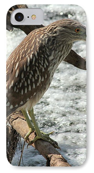 IPhone Case featuring the photograph Immature Night Heron by Kenny Glotfelty
