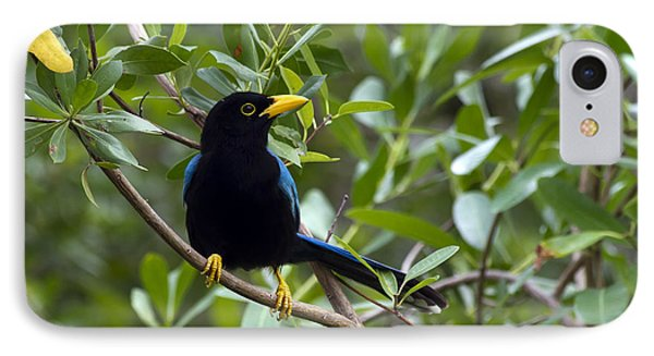 IPhone Case featuring the photograph Immature Yucatan Jay by Teresa Zieba