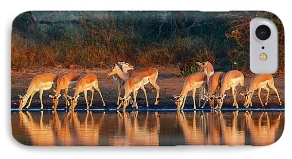 Impala Herd With Reflections In Water IPhone Case by Johan Swanepoel