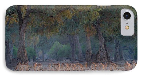 Impalas At Dawn IPhone Case