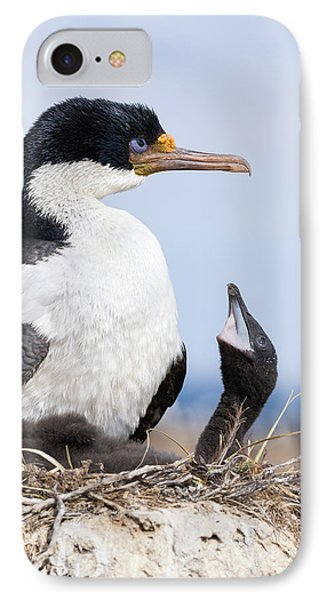 Imperial Shag Also Called King Shag IPhone Case