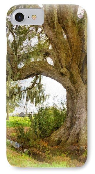 In Praise Of Live Oaks 2...paint IPhone Case by Steve Harrington
