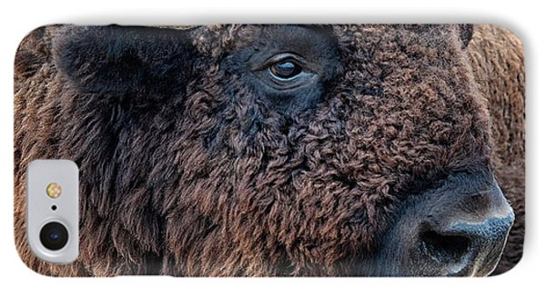 In The Presence Of  Bison - Yes Paint Him IPhone Case