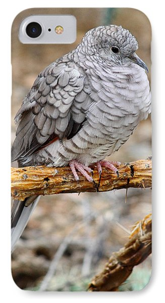 IPhone Case featuring the photograph Inca Dove by Elaine Malott