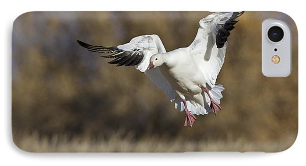 IPhone Case featuring the photograph Incoming Snow Goose by Bryan Keil