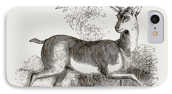 Indian Antelope IPhone Case by Litz Collection