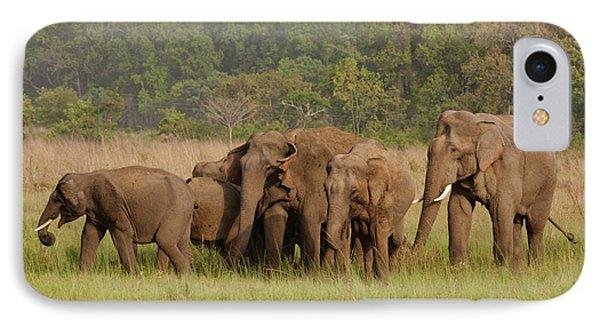Indian Asian Elephant, Herd IPhone Case by Jagdeep Rajput