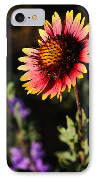 Indian Blanket Phone Case by Thomas Pettengill