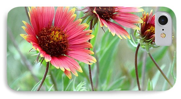 Indian Blanket Wildflowers IPhone Case