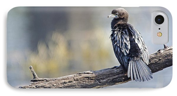 Indian Cormorant IPhone Case