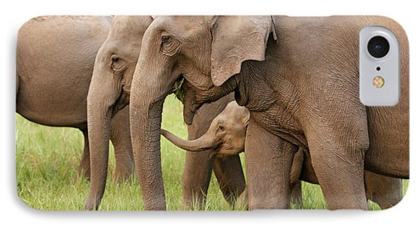 Indian Elephant Calf Playing IPhone Case