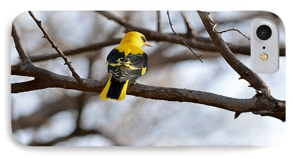 Indian Golden Oriole IPhone Case by Fotosas Photography