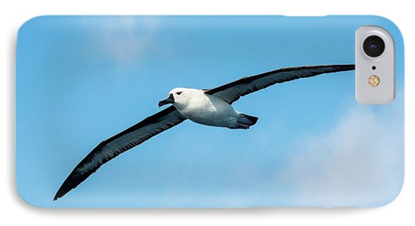Indian Ocean Yellow-nosed Albatross IPhone 7 Case by Peter Chadwick