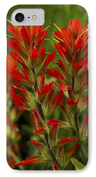 Indian Paintbrush IPhone Case by Alan Vance Ley