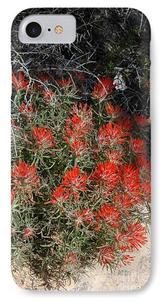 333p Indian Paintbrush Flower IPhone Case