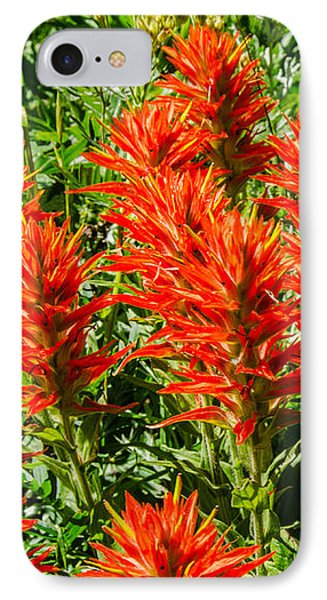 Indian Paintbrush IPhone Case by Sue Smith