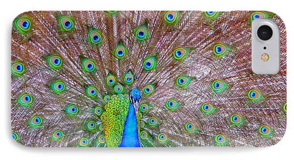 Indian Peacock IPhone Case by Deena Stoddard
