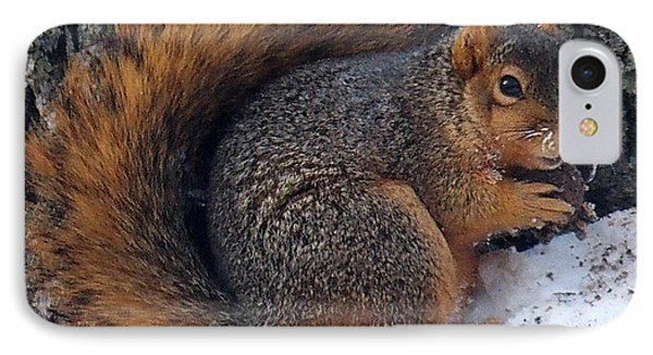 Indiana Squirrel In Winter With Nut IPhone Case by Steve Archbold