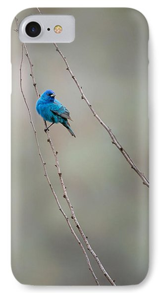 Indigo Bunting IPhone Case by Bill Wakeley