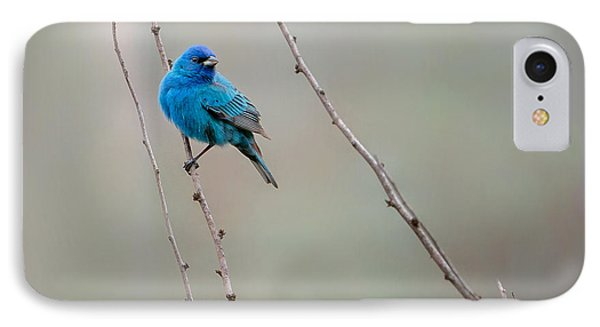Indigo Bunting Square IPhone Case by Bill Wakeley