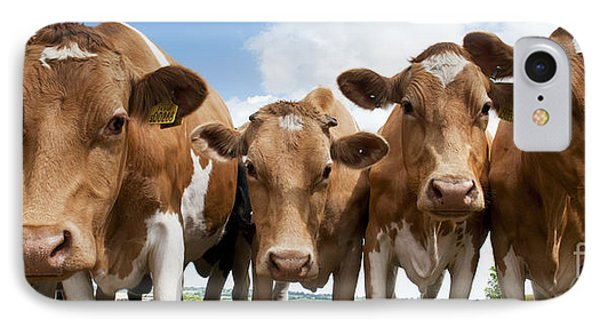 Inquisitive Cows IPhone Case