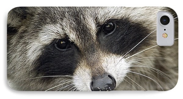 Inquisitive Raccoon IPhone Case by Jane Axman