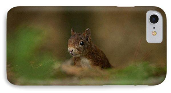 Inquisitive Red Squirrel IPhone Case