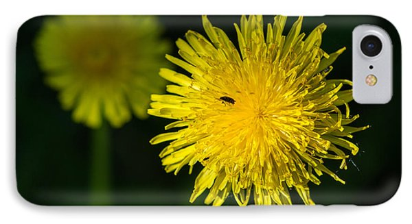 Insects On A Dandelion Flower - Featured 3 Phone Case by Alexander Senin