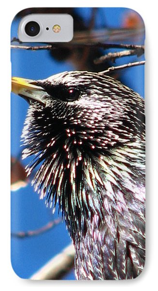Intent - Bird Body Language IPhone Case by Cleaster Cotton