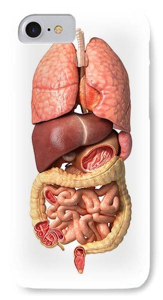 Internal Organs Of The Respiratory Phone Case by Leonello Calvetti