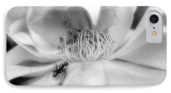 IPhone Case featuring the photograph Intrigue Rose In Black And White by Louise Kumpf