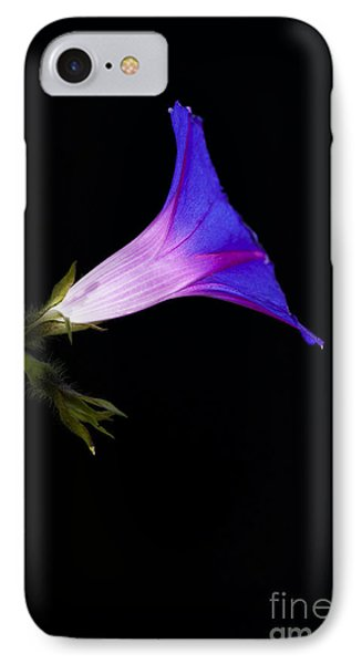 Ipomoea Morning Glory Phone Case by Tim Gainey
