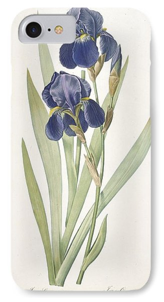 Iris Germanica Bearded Iris IPhone Case by Pierre Joseph Redoute